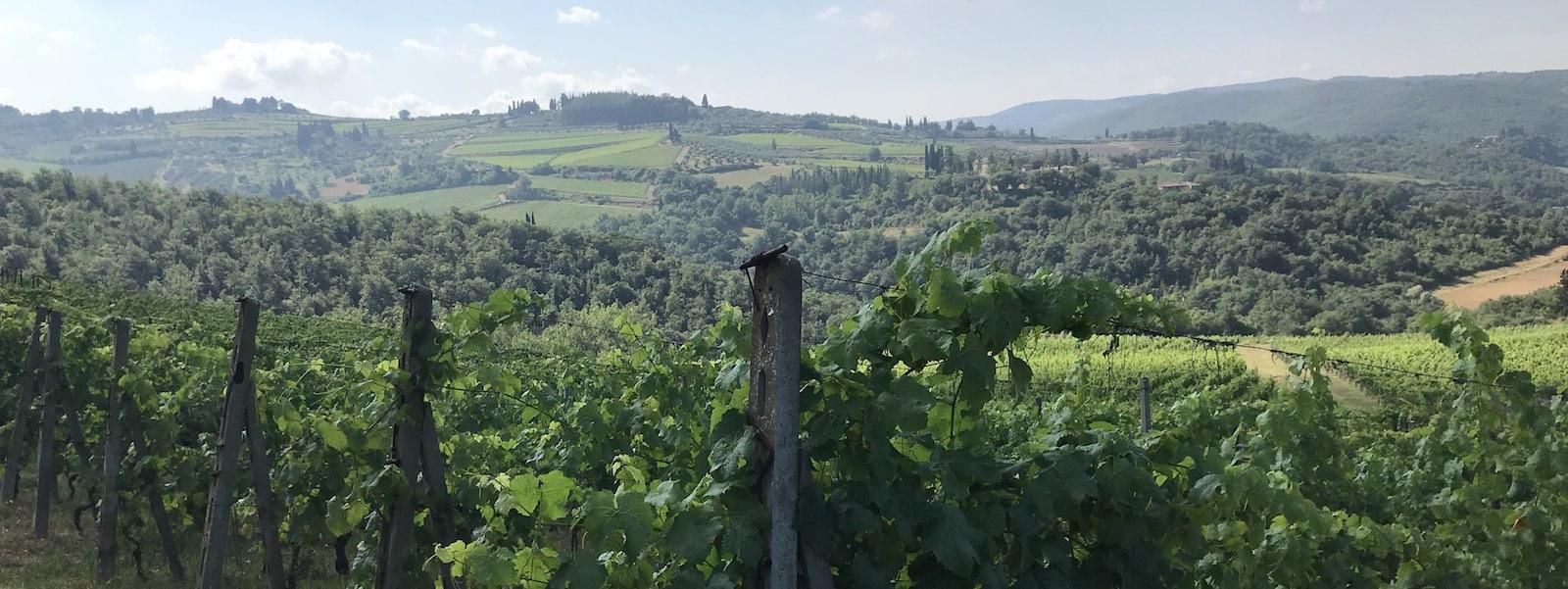 Natural wine vineyards
